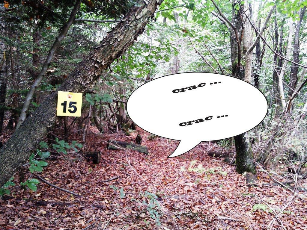 01 les branches carquent quelque chose arrive