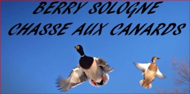 berry sologne canards